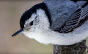 bird featured